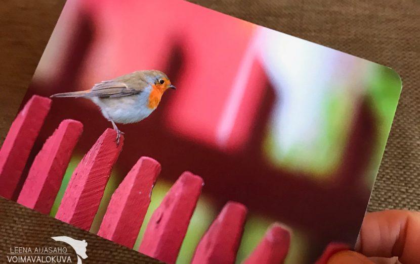 Punarinta postikortti kuvauspaikka Utö